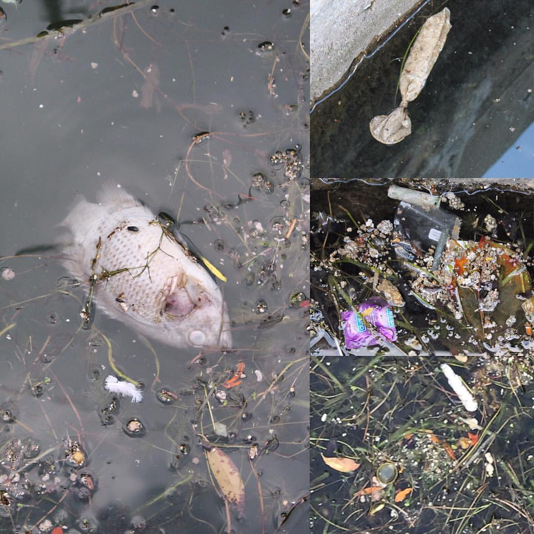 Sewage debris found along Toronto's inner harbour on September 8, following the previous night's heavy rain. (Images by Lake Ontario Waterkeeper)