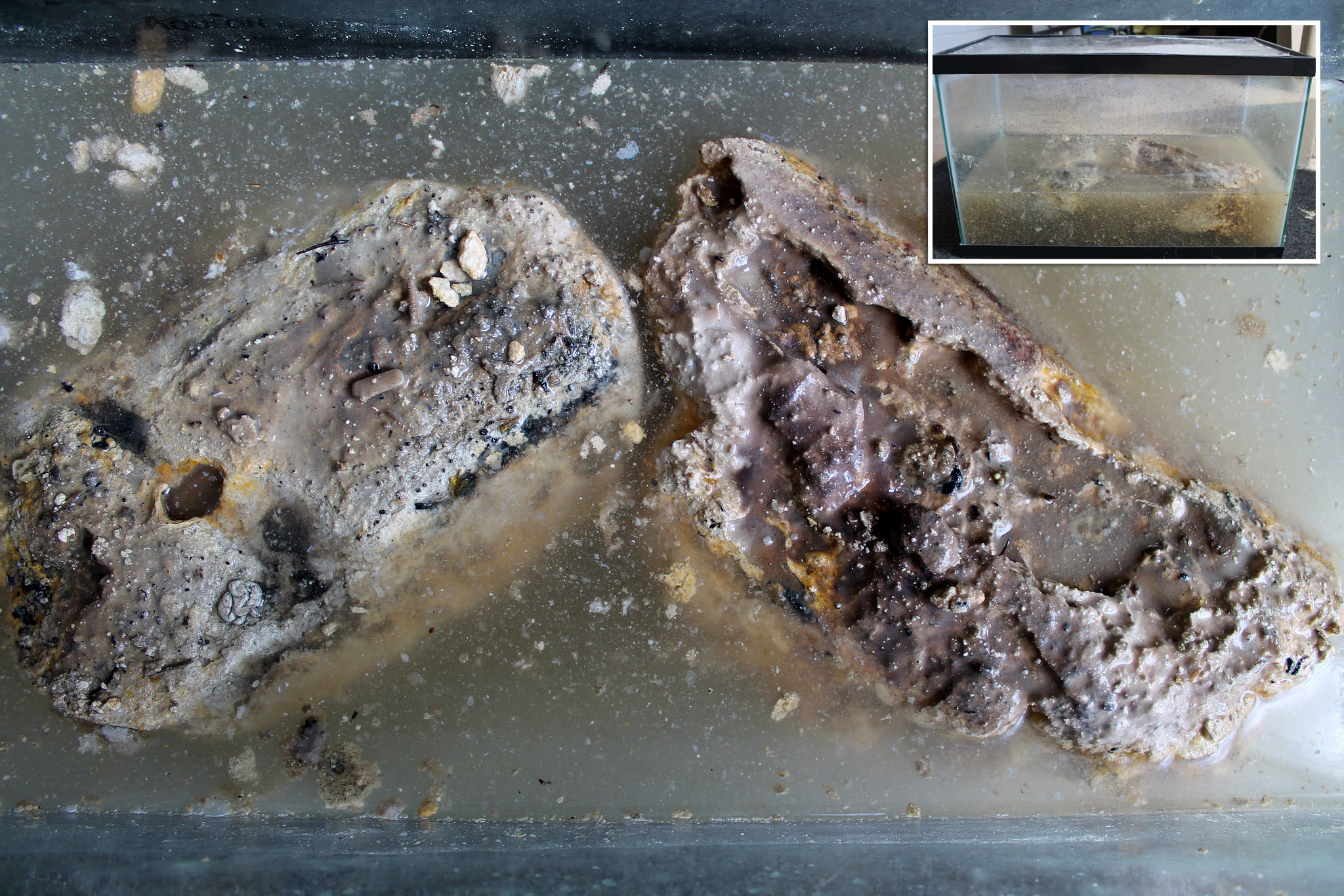 Stored and sealed in a fish tank, Barry uses this fatberg for outreach presentations. (Photo by Ruby Pajares)