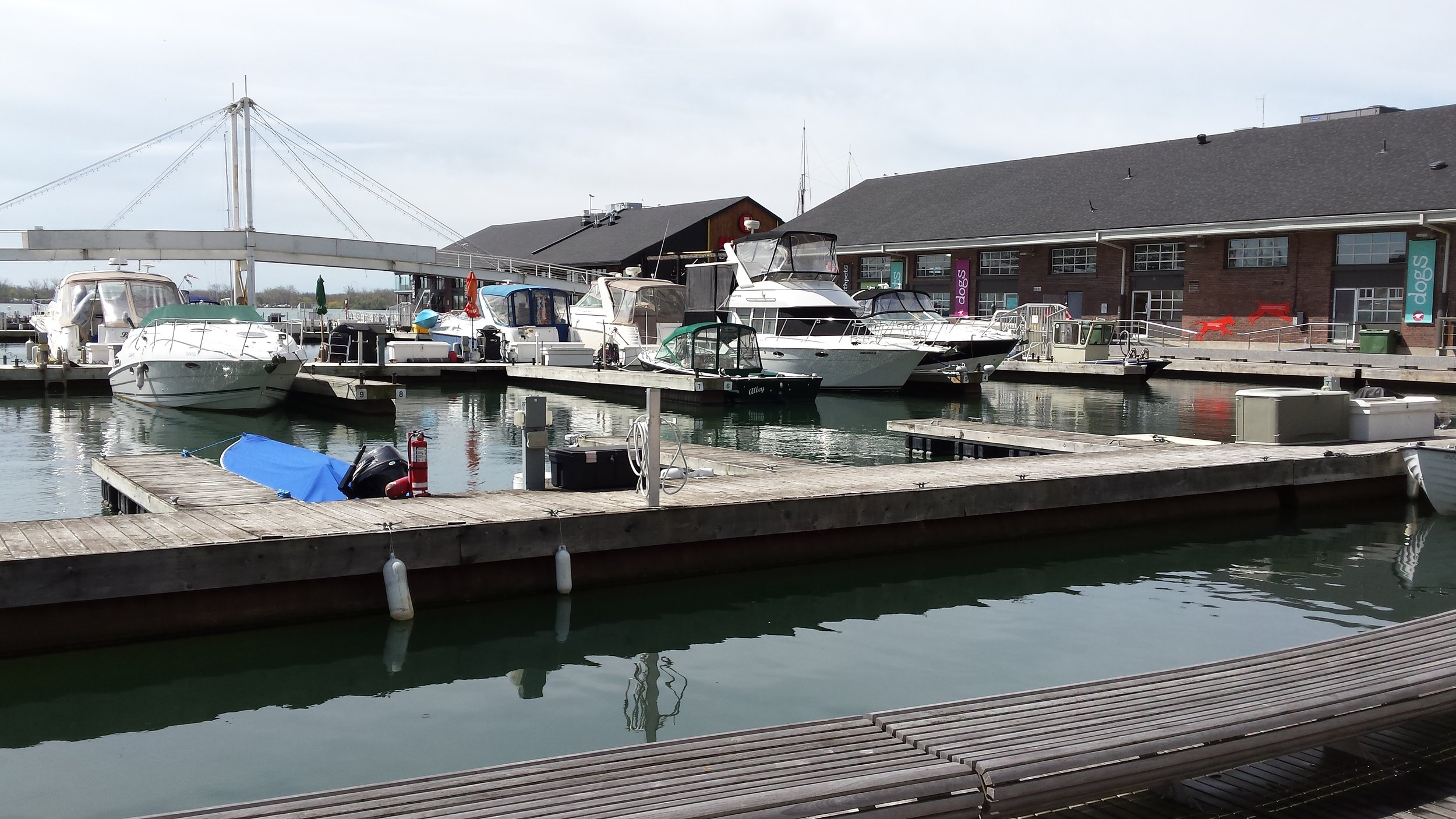 Pier 4 Marina. The green water is a welcome sight. Photo by Lake Ontario Waterkeeper.