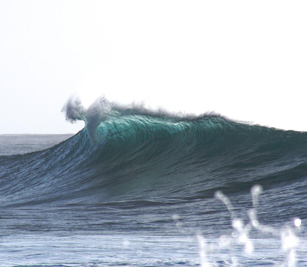 Wild Waves and Wild FIsh with Ramon Navarro - Patagonia Toronto - Lake Ontario Waterkeeper - Swim Drink Fish.jpeg