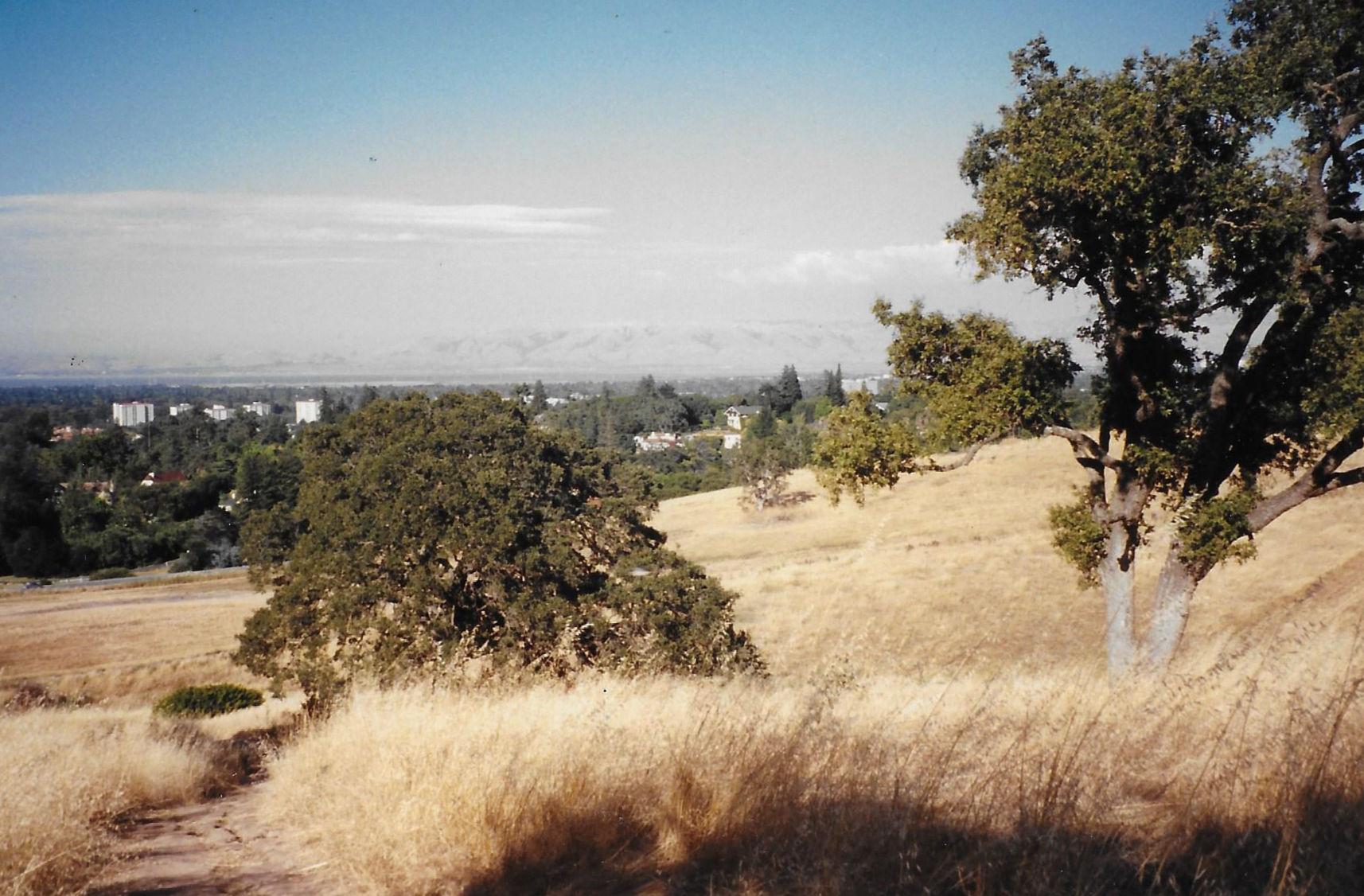 ARCADIA - A drama set in Palo Alto, CA .