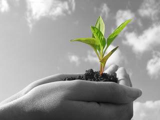 hand holding seedling.jpg