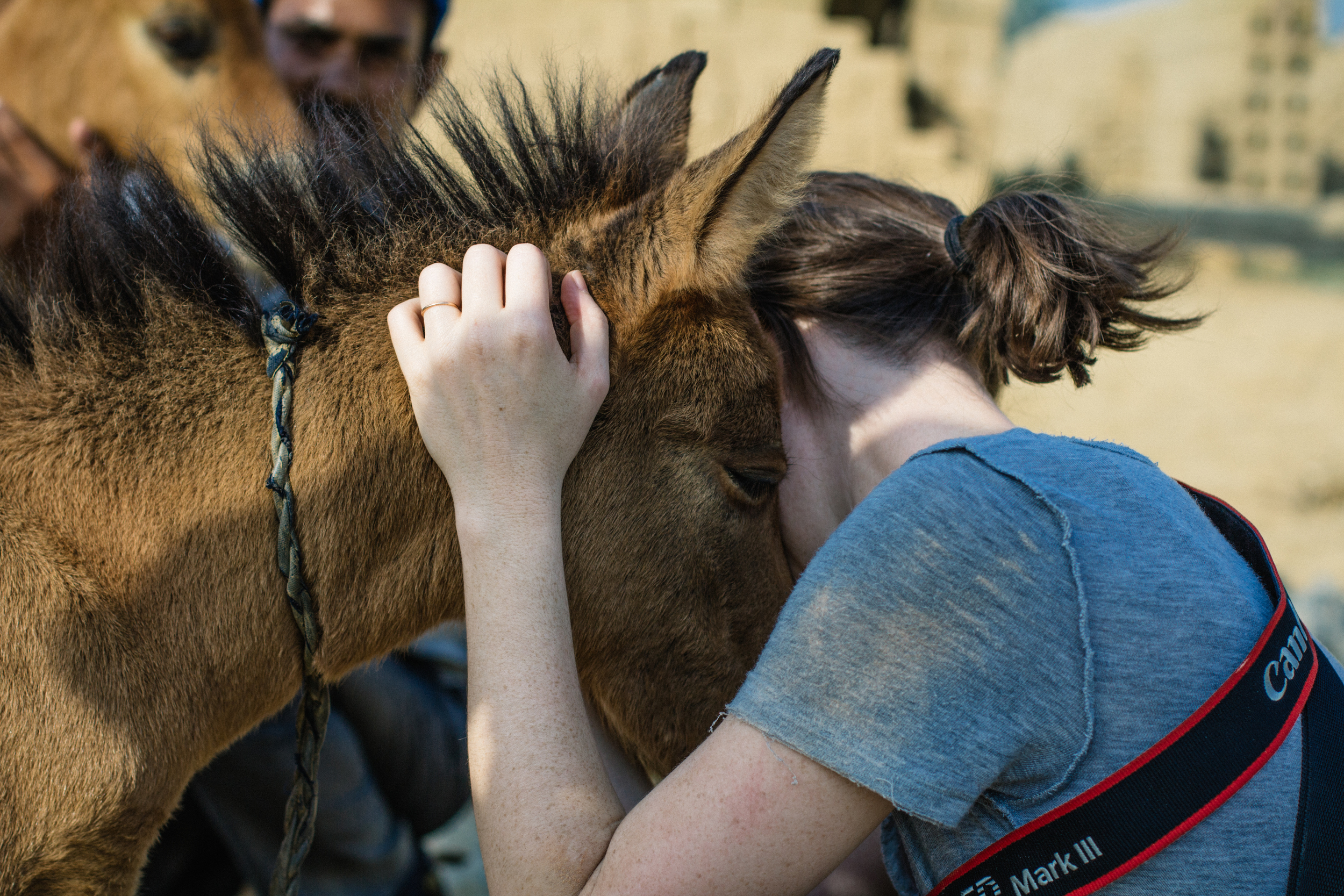 Foals in India