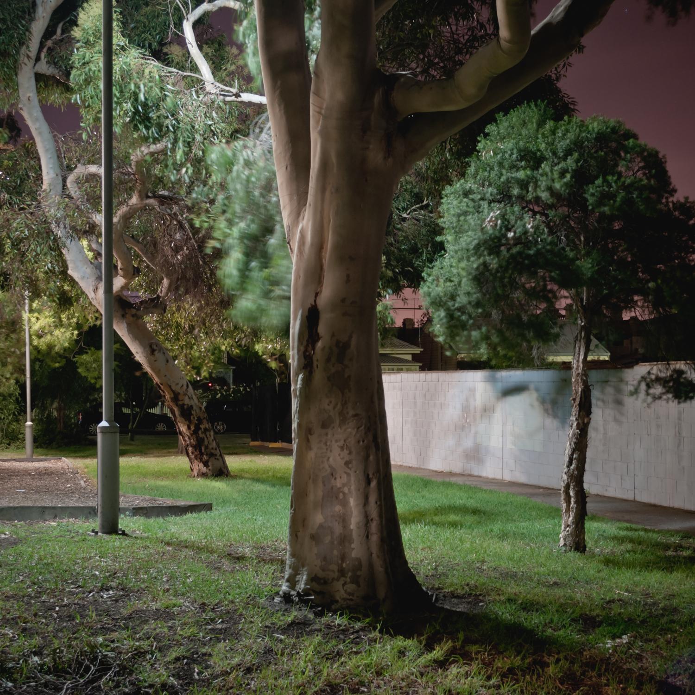 Gum Tree.jpg