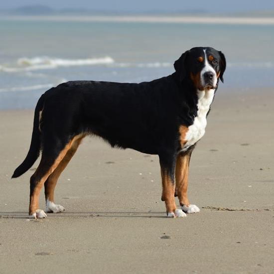 Gaia at the beach !