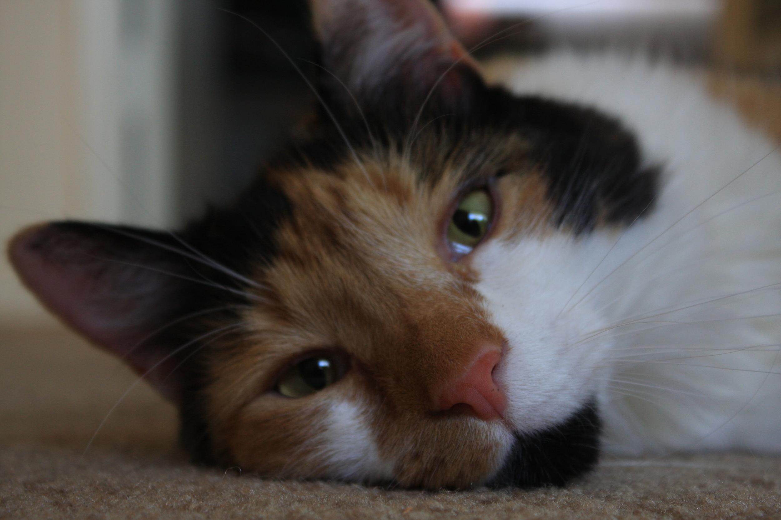 Miz Kitty