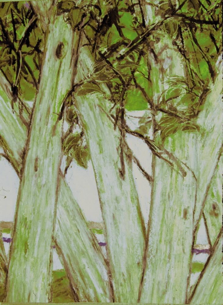 Walnut Trees - Les Noyers, 2005, 20x 30cm, pastel on paper - pastel sur papier, personal collection - collection personelle