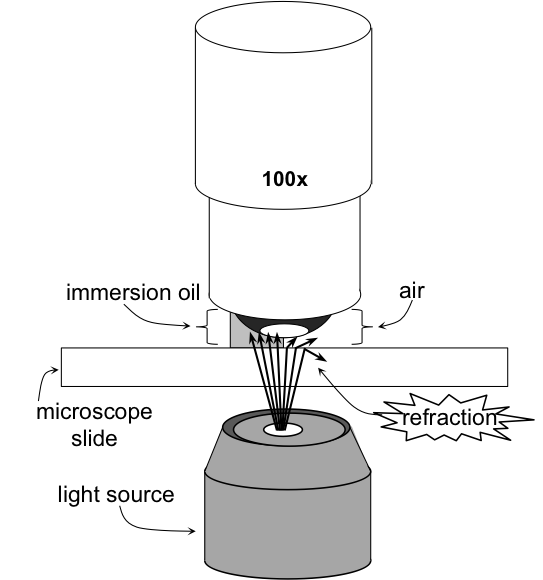 Principle of immersion microscopy. At high magnification power, light waves refract off the glass in the microscope slide and slip cover. Immersion oil has a high refractive index, minimizing this refraction allowing light to enter the objective in a straight line. This increases resolution of the specimen.