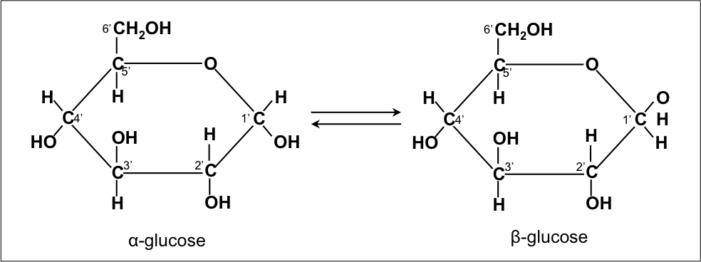 Two isomers of glucose: α  -glucose and   β-glucose (C6H12O6)