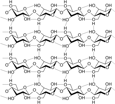 Molecular structure of cellulose