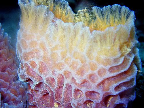 Small_Sponge.jpg