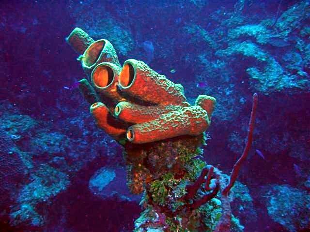 SpongeColorCorrect.jpg