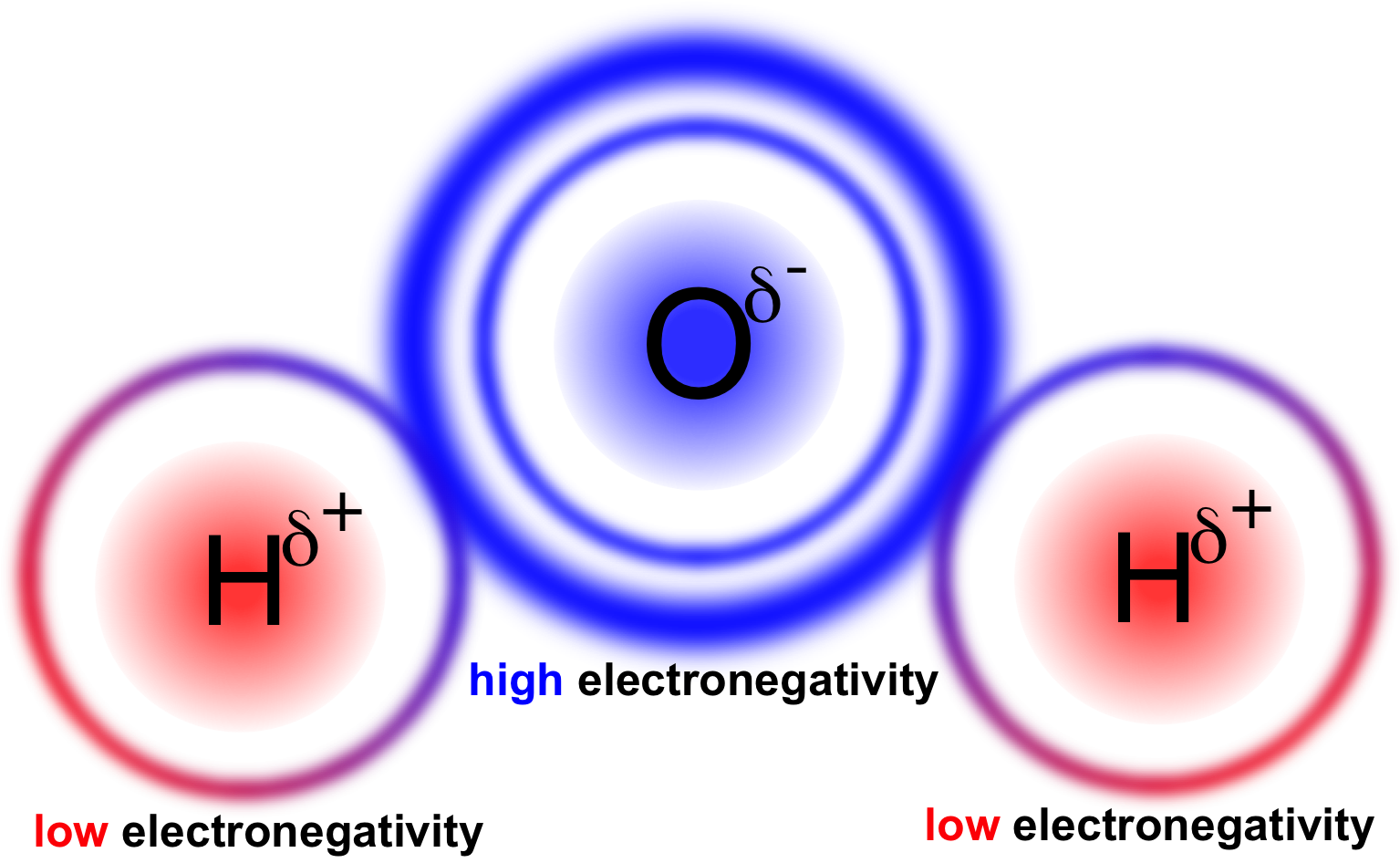 Figure 13.   Polarity in water.  Oxygen has a higher electronegativity than hydrogen causing it to retain shared electrons more, giving oxygen a partially negative charge and hydrogen a partially positive charge.