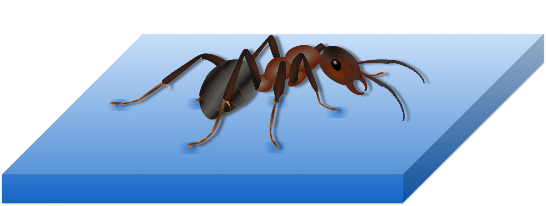 Figure 18.   Insects can walk on water due its cohesive property.