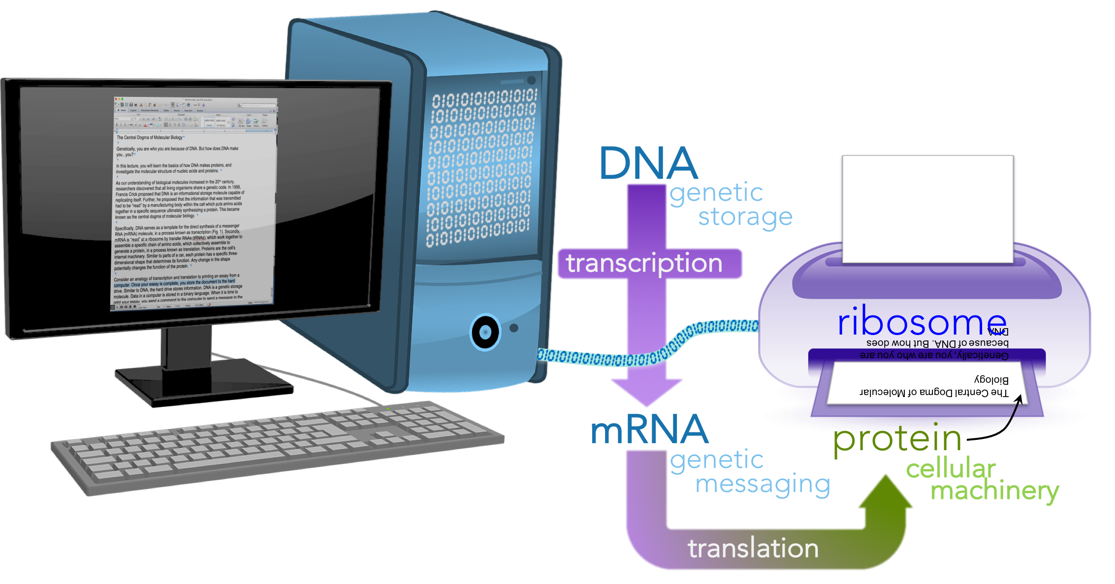 Figure 2.  Printing a paper as a metaphor for the central dogma.