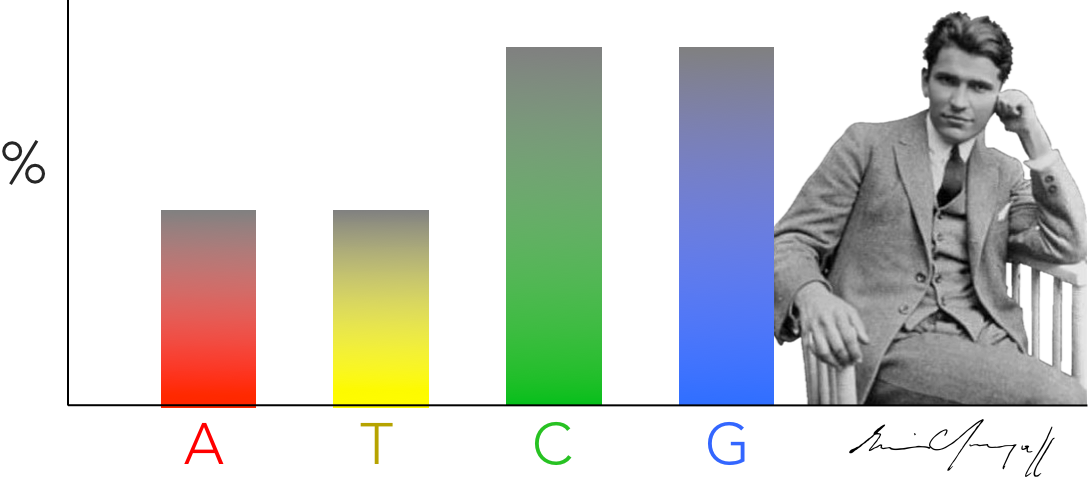 Figure 7.  Chargaff's discovery. Erwin Chargaff discovered that the abundance of of cytosine and guanine are equal to each other & the abundance of adenine and thymine are equal within an organism. He found these results consistent across several species, and lead James Watson and Francis Crick to hypothesize DNA base pairing hypothesis.