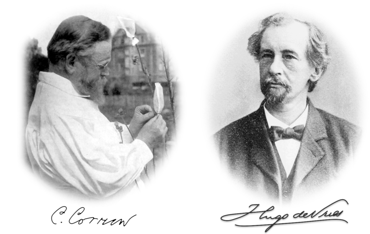 Figure 2 . Carl Correns and Hugo de Vries rediscovered Mendelian's principles.