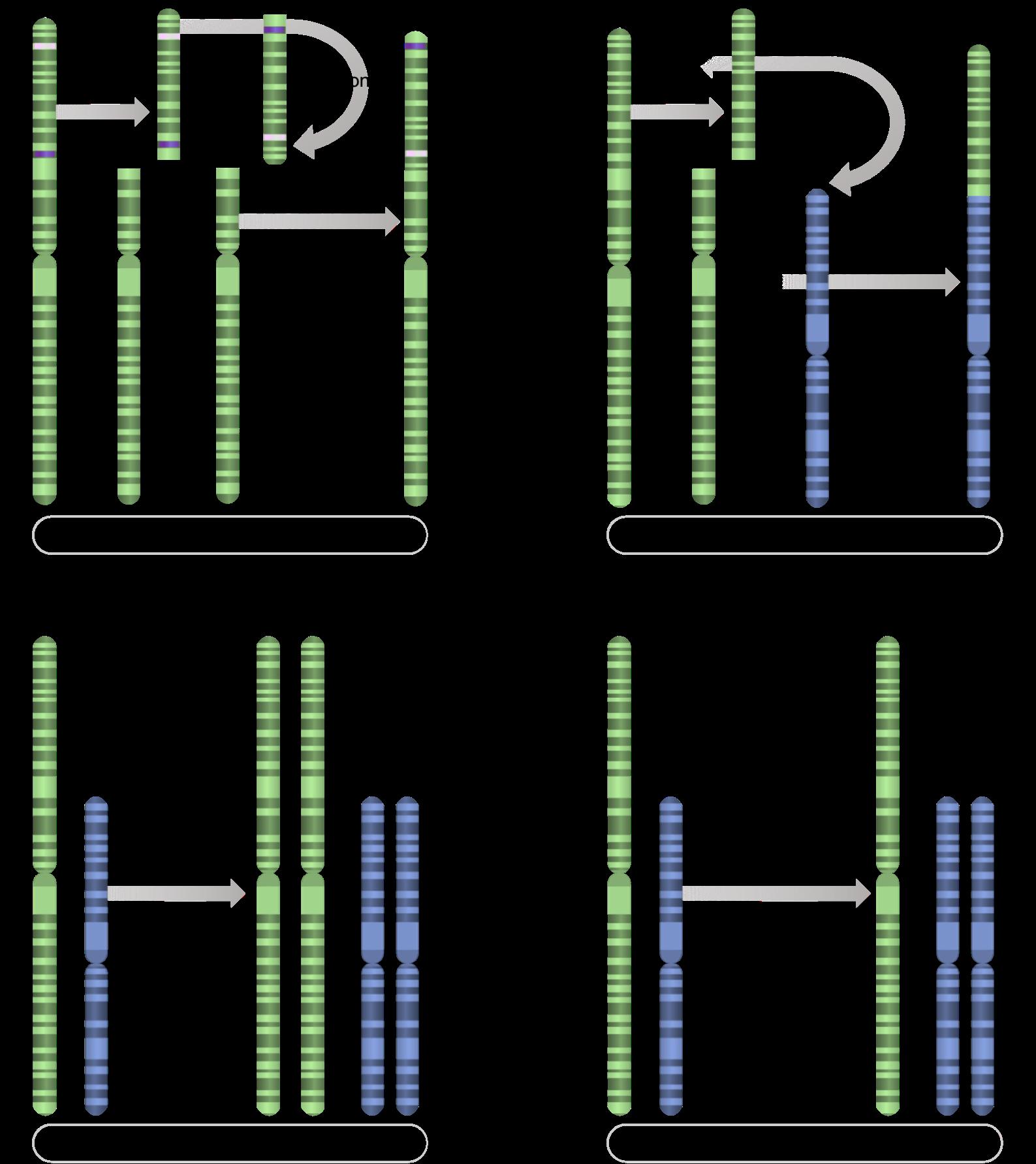Figure 7.   Chromosome-level mutations.