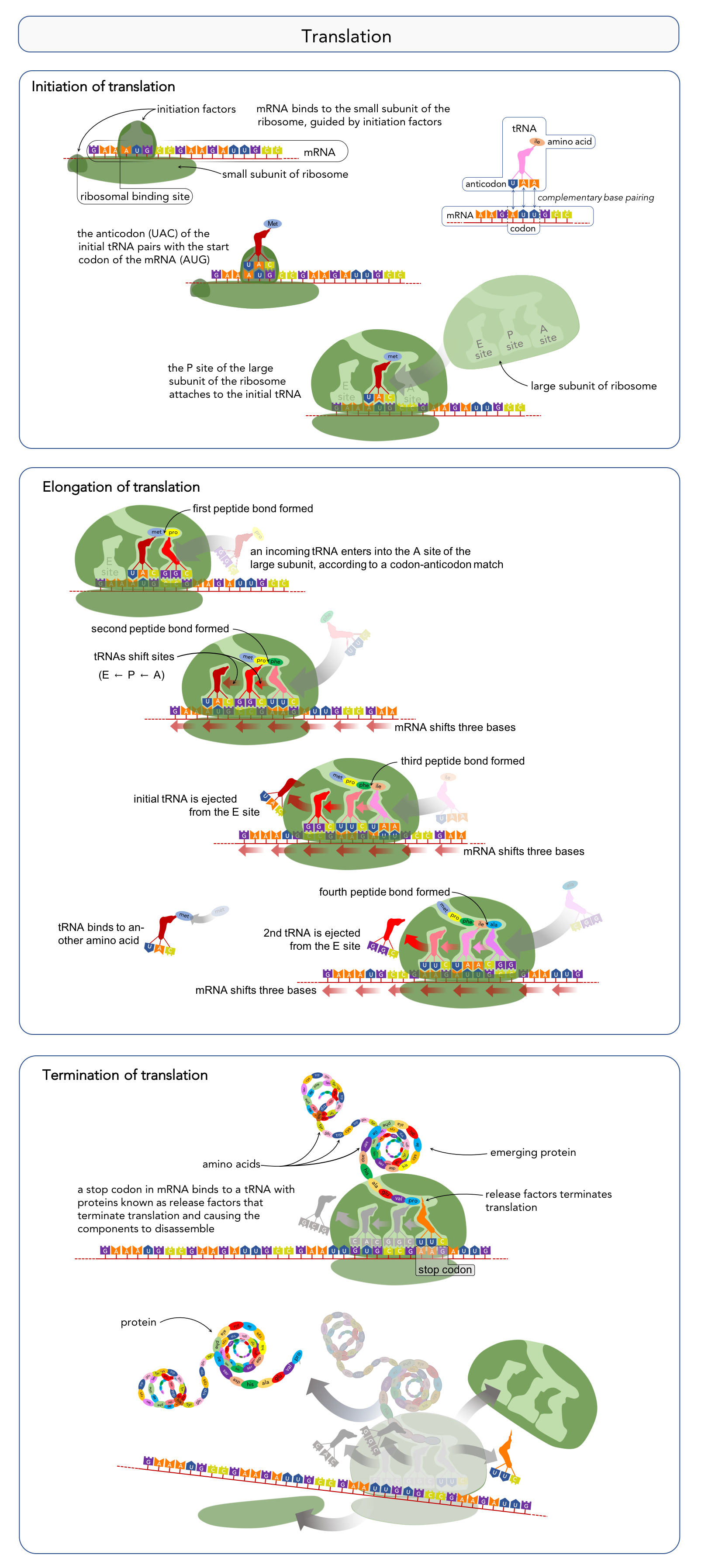 Figure 12.   Steps of translation .