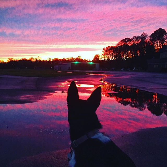 Purpelee perps 💜💟👀💟💜 #nashville #sunset #purpledog