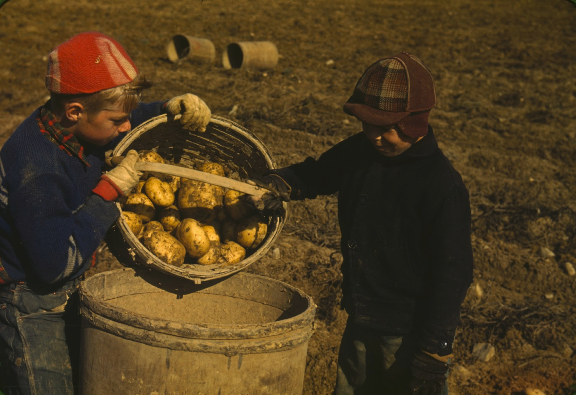 PHOTO CREDIT: A vintage photograph of children gathering potatoes on a farm near Caribou, Aroostook County, Maine. Photographer:  Jack Delano  .