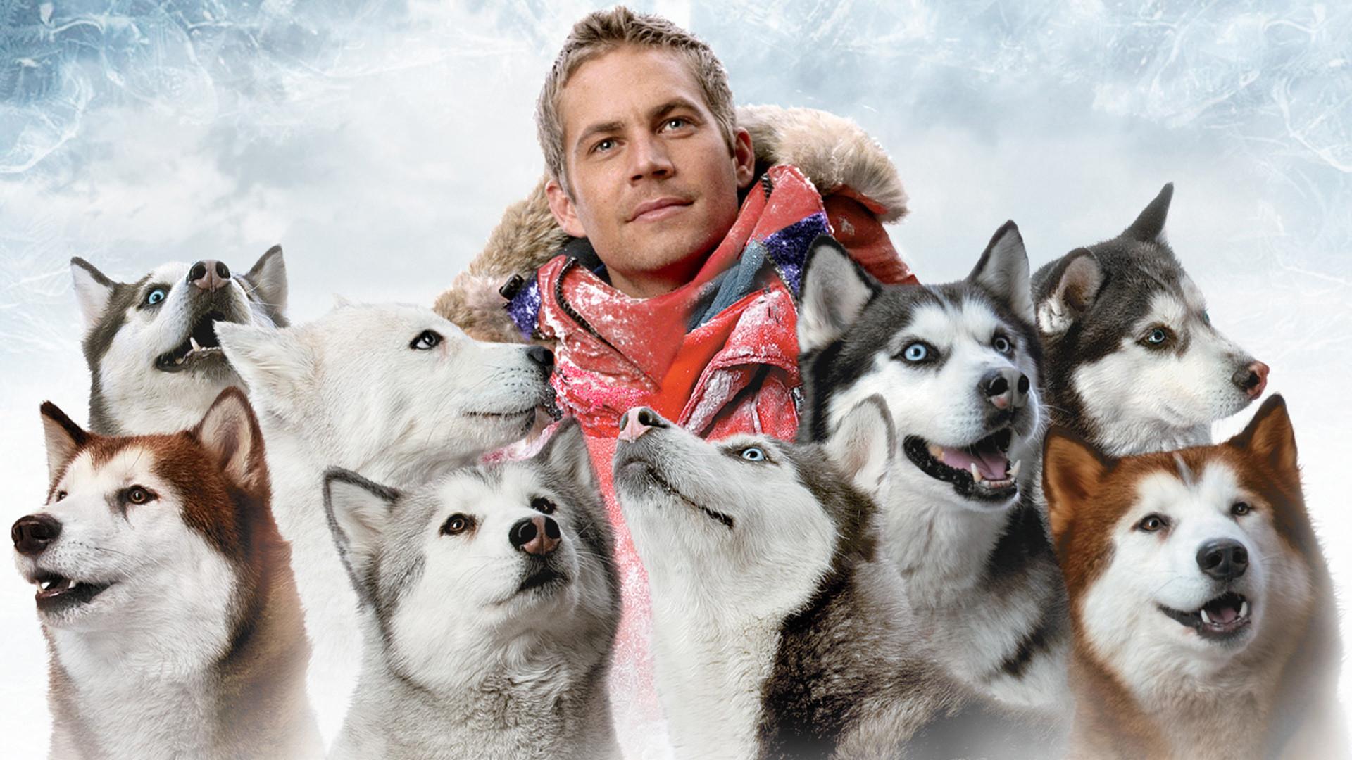 PHOTO CREDIT:  Image of Paul Walker and his beloved huskies from Eight Below via  Google .
