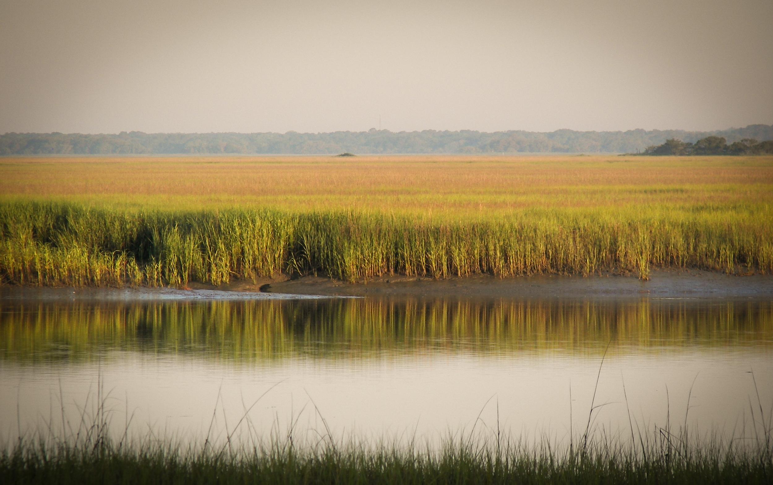 Image of Hunting Island, South Carolina via  Google .