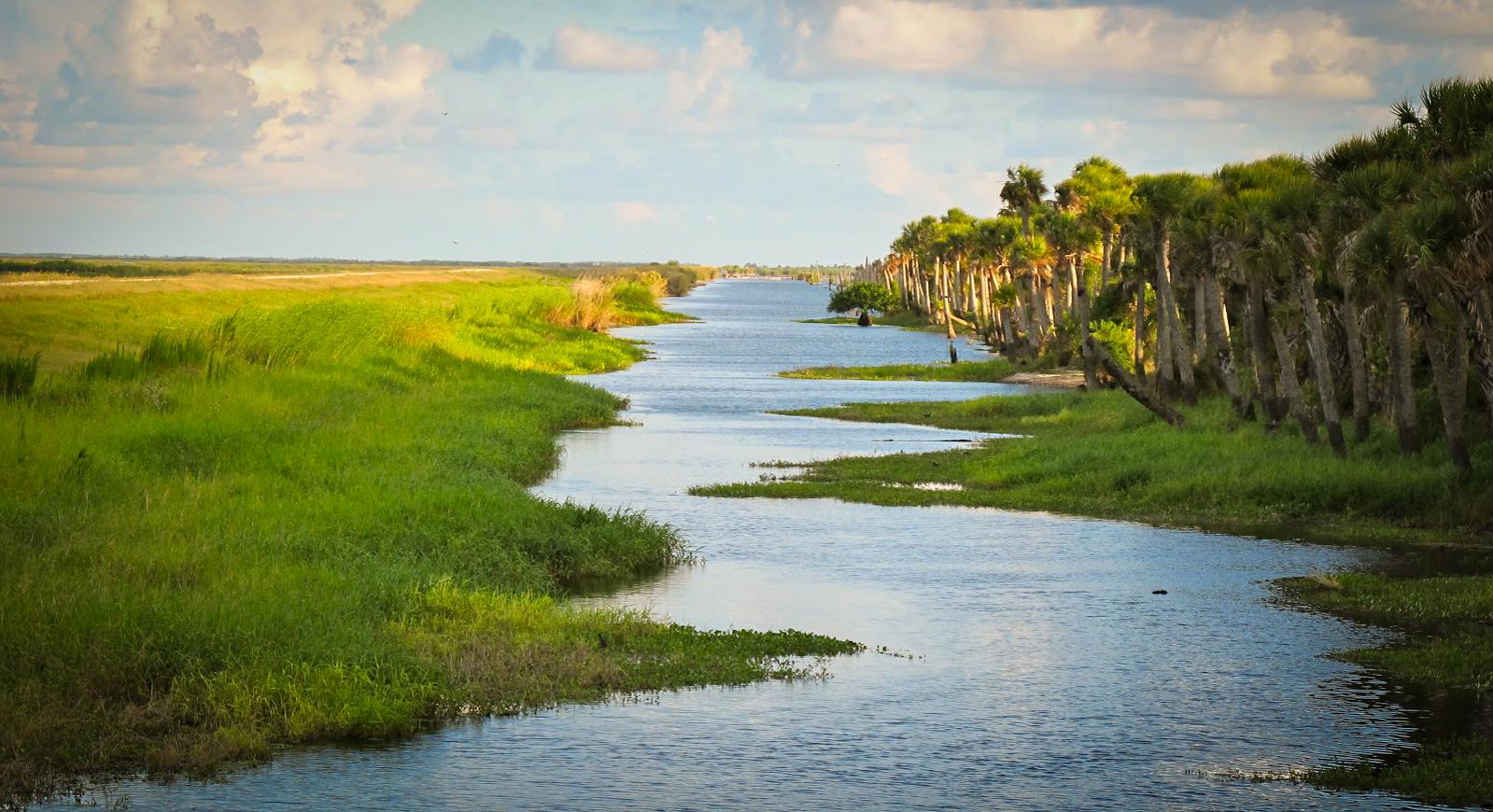 Image of Everglades, Florida via  Google .