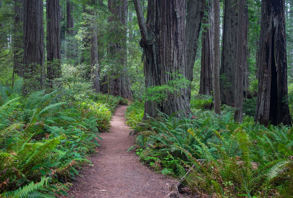 Movies filmed at Redwood National Park includes E.T., The Extra-Terrestrial, Star Wars Episode IV: Return of the Jedi; The Lost World, Jurassic Park; and Outbreak.