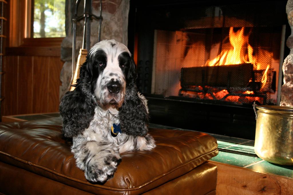 Ollie at cabin -- 2006.jpg