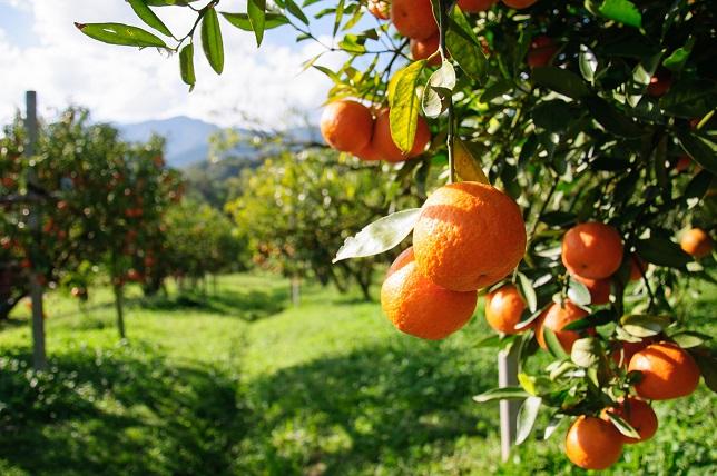 Orange Grove-Smal.jpg