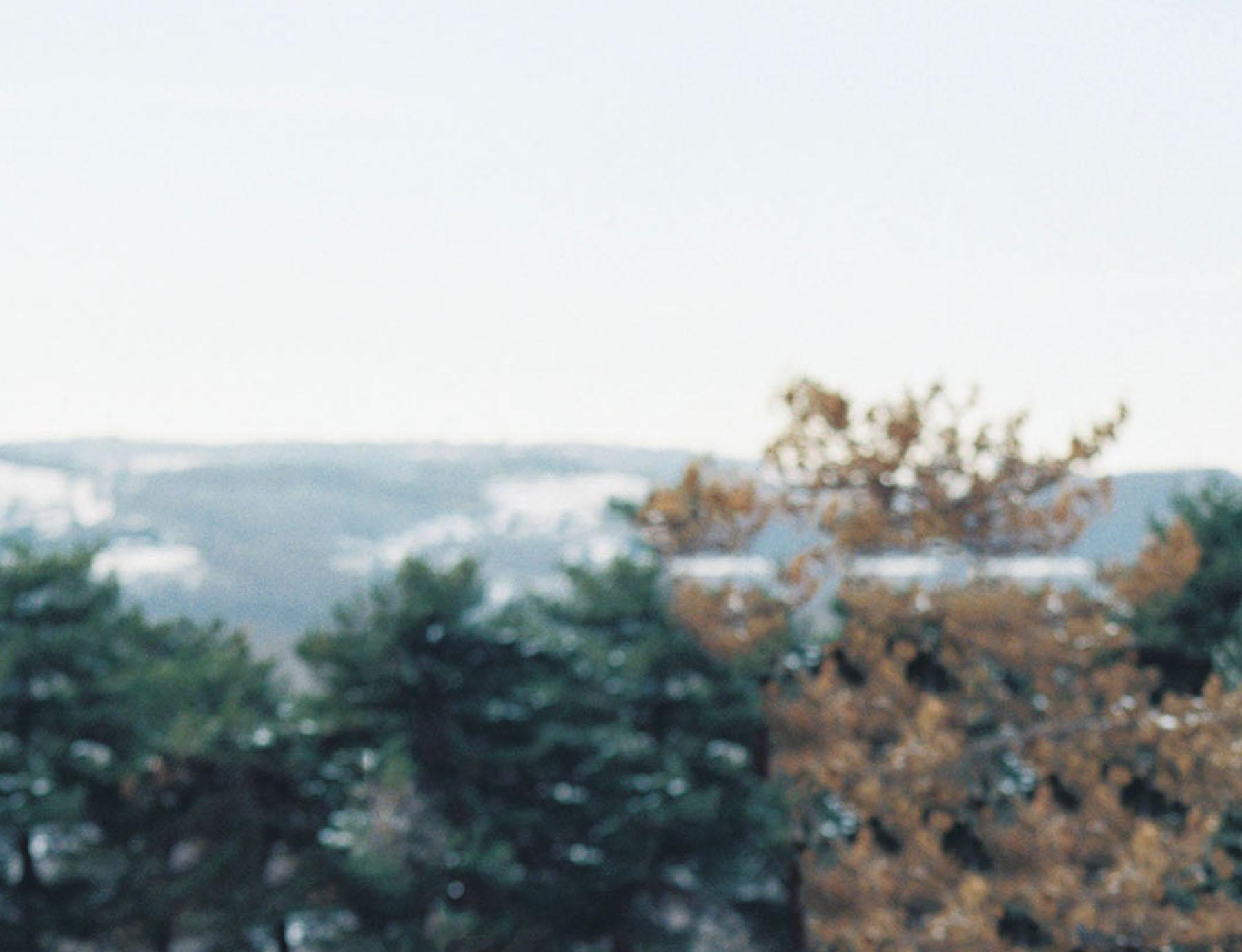 kateweinsteinphoto_trees4.jpg
