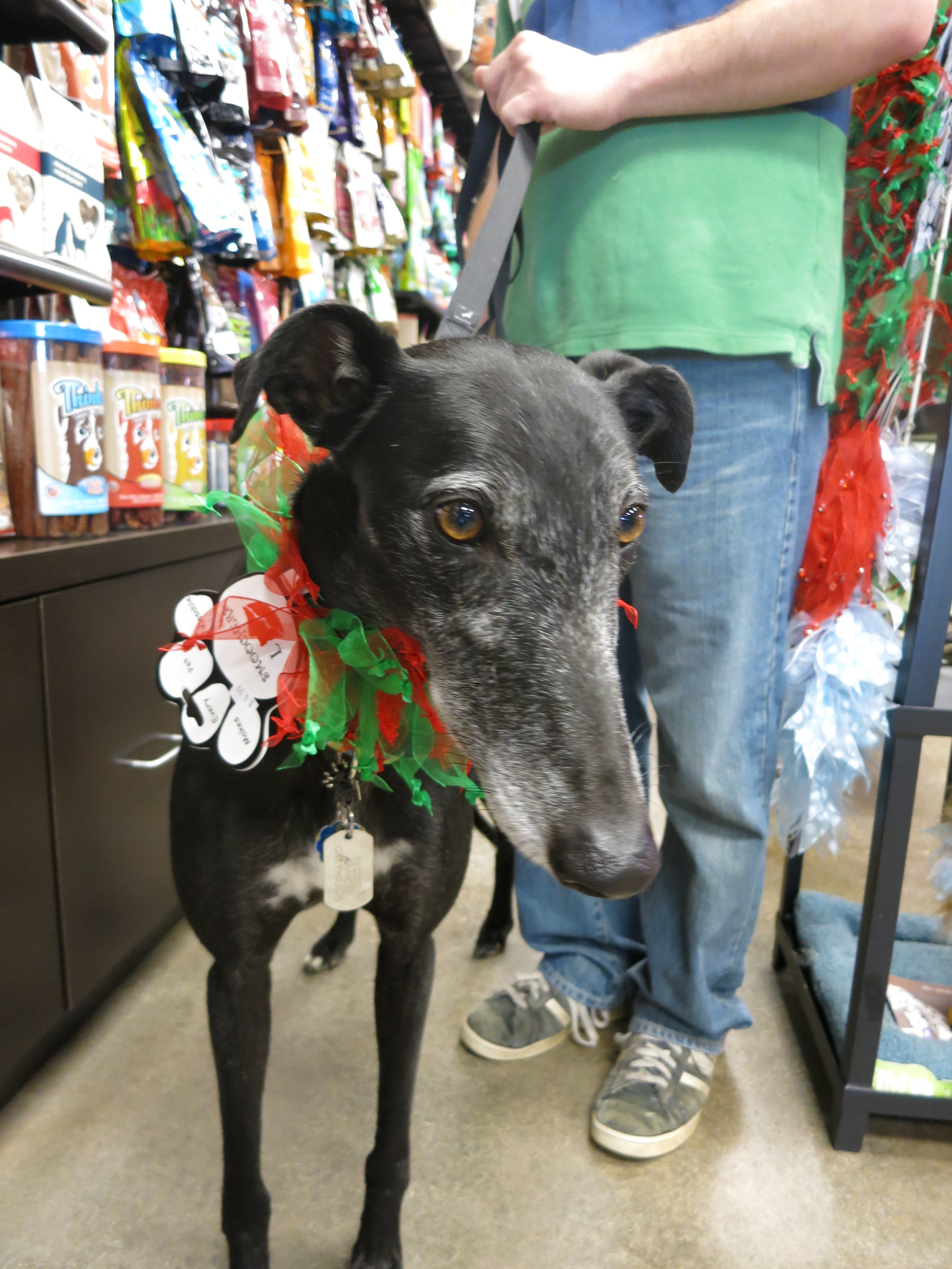 Trying on a little Christmassy collar in the store.