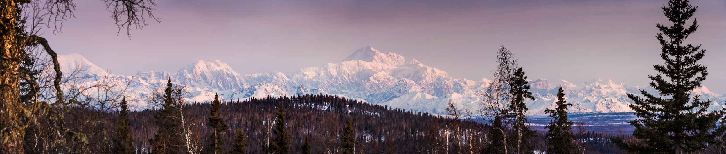 Denali+from+Karl+%26+Mary%27s+cabi-2757028508-O.jpg