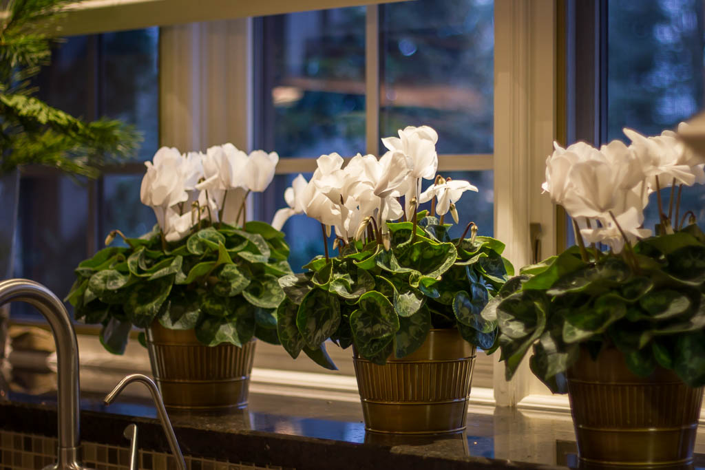 Barrie holiday decorating flowers.jpg