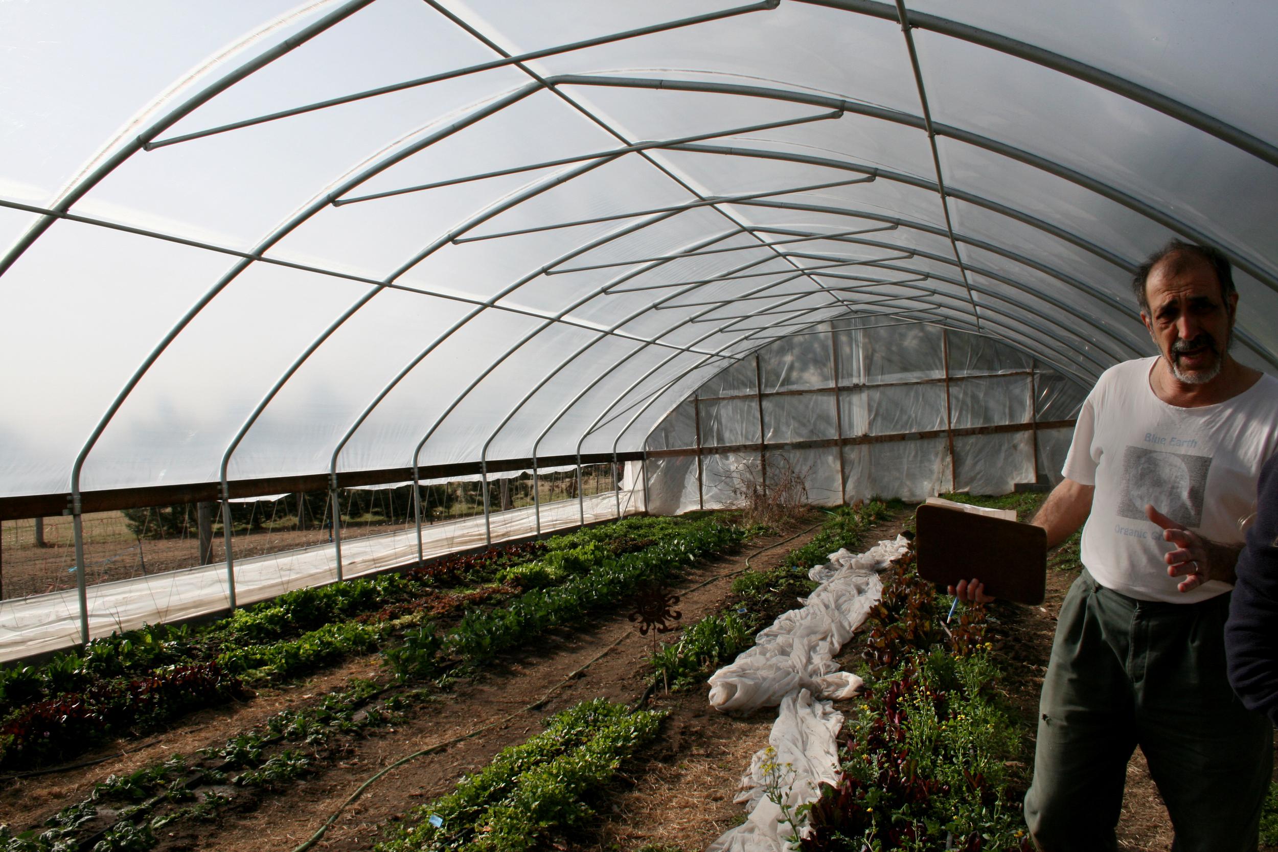 Inside Greenhouse | Parideaza Farms