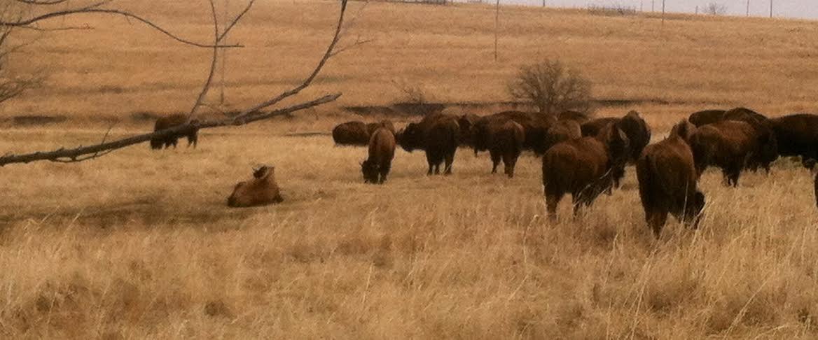 Plumlee Buffalo