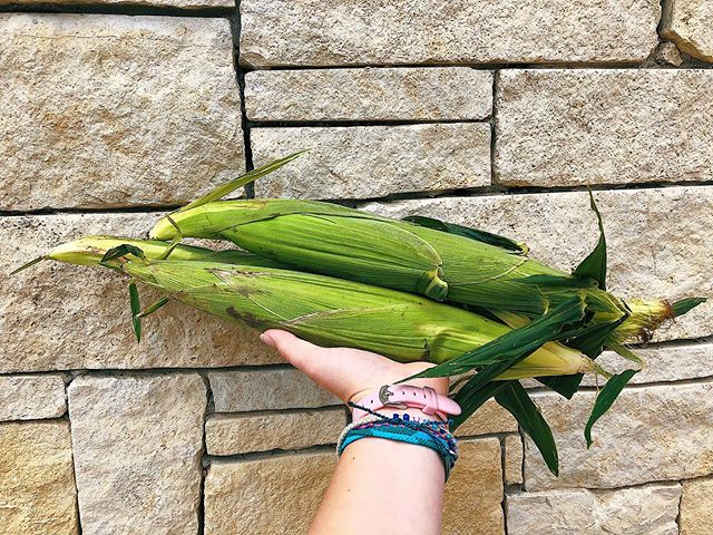 This might be CORN-y but our local organic sweet corn is a-MAIZE-ing 🌽🌽 Come grab some for $0.99 each!!