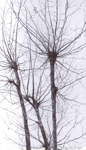tree19_72dpi-e1472050766150.jpg