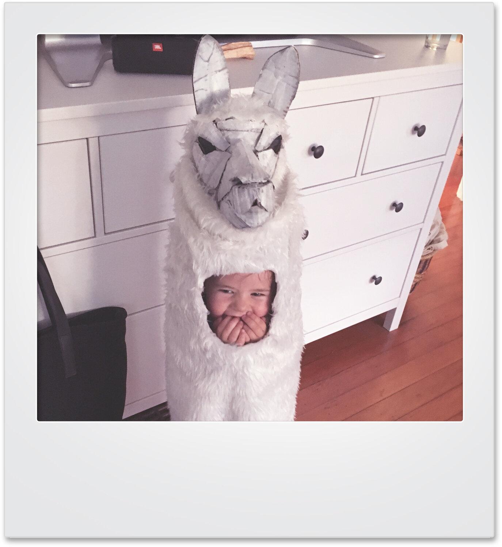 polaroid_llama_mikaylabutchart.jpg