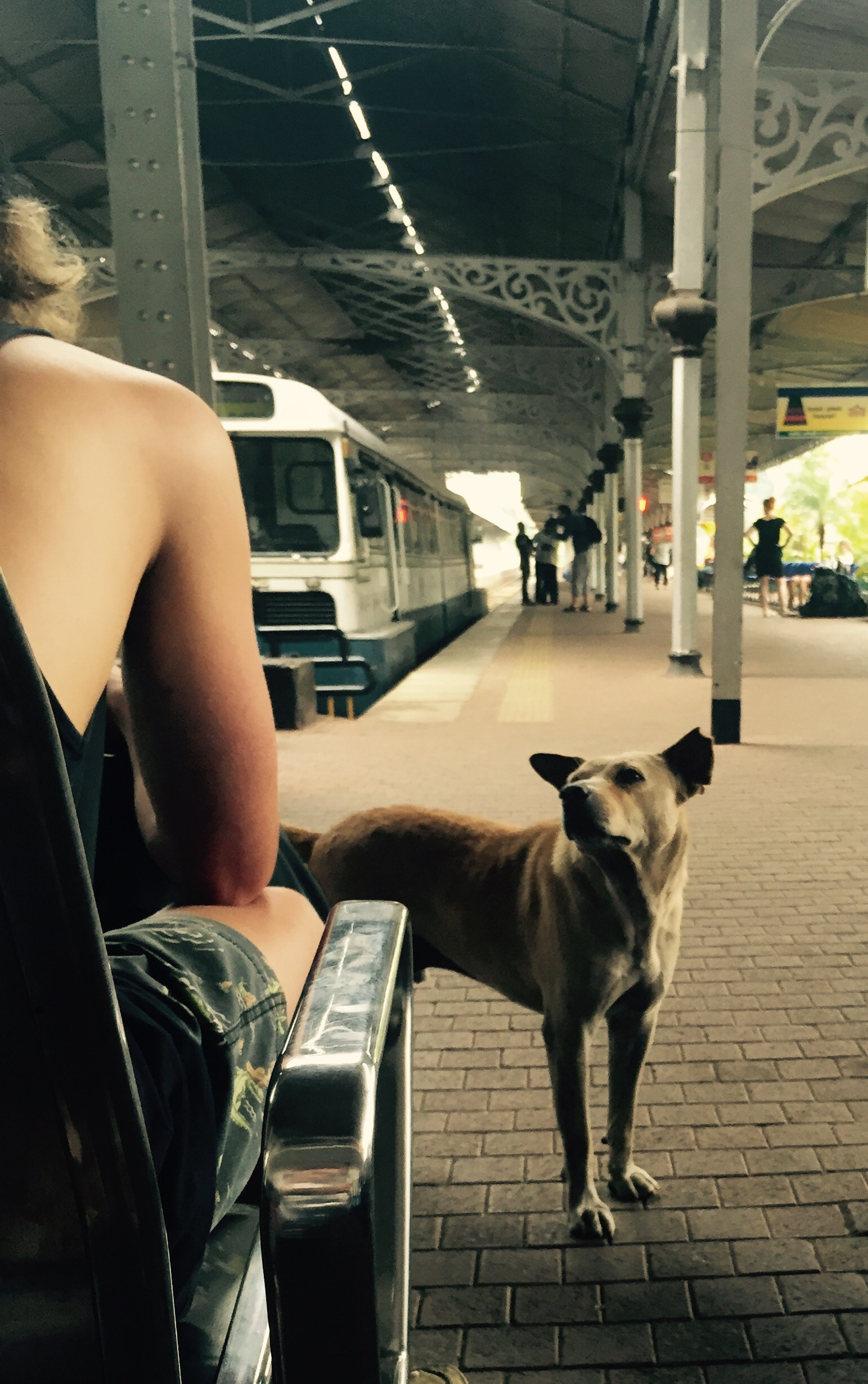 Train station brown dog.