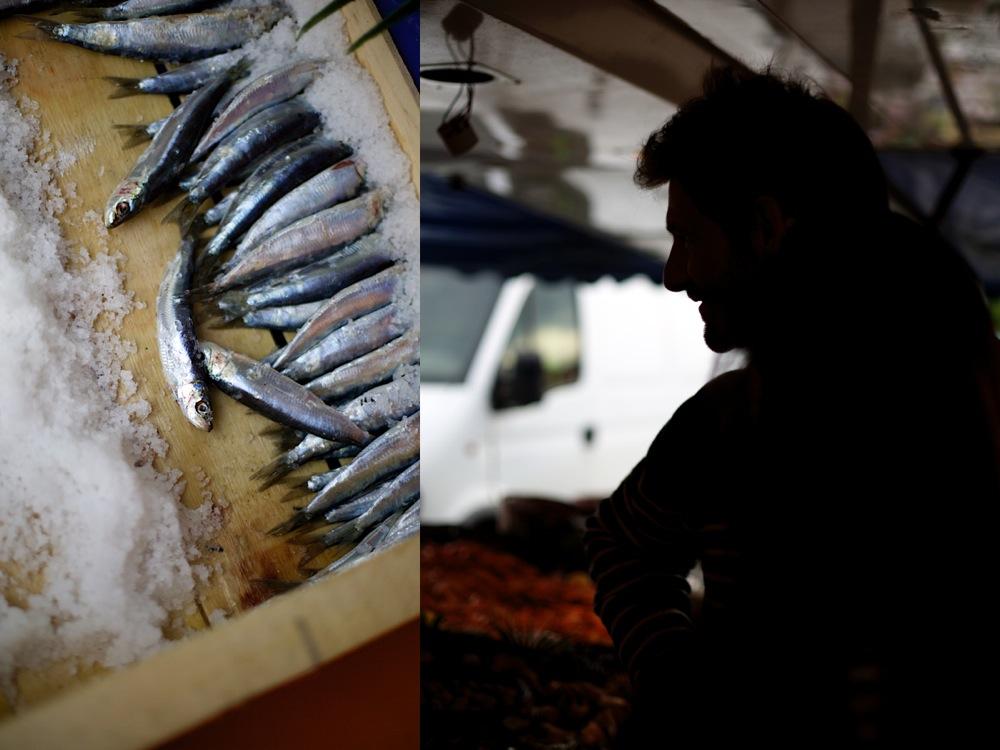 sardines - Charlie.jpg
