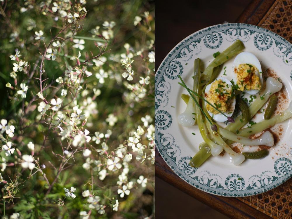 Mimosa eggs.jpg