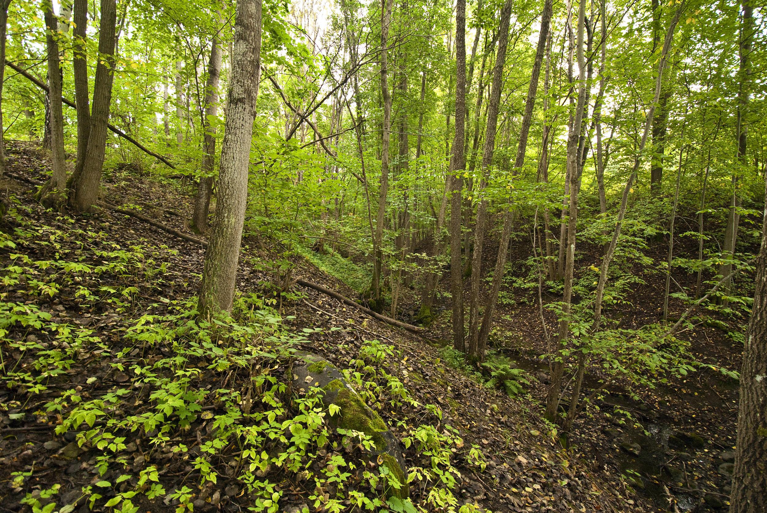 Sätraskogen - ett av Stockholms fina naturreservat. Snart även på Naturkartan. Foto: Johan Pontén