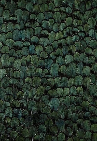 Peacock Wallcovering - Schumacher