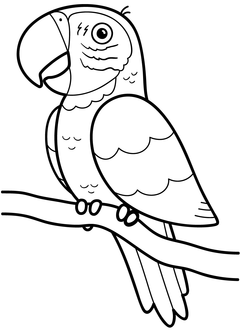 Black and White Parrot