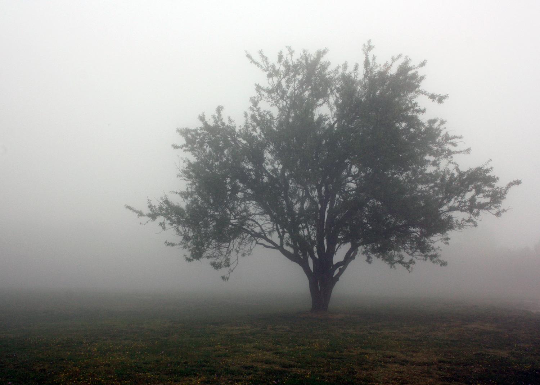 1500pxDPI300_FoggyFrenchTree.jpg