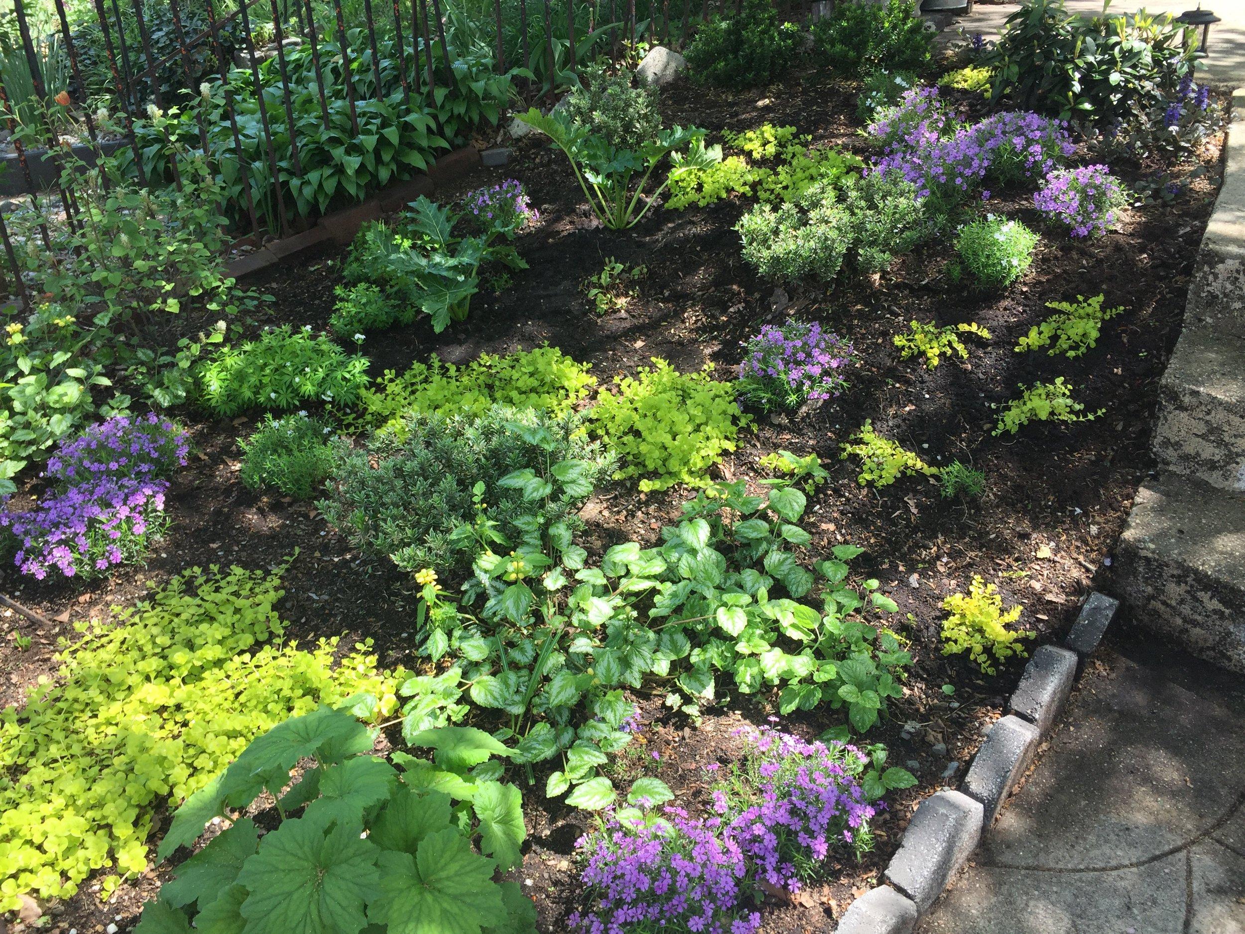 Williamsburg Shady Perennial Garden Design