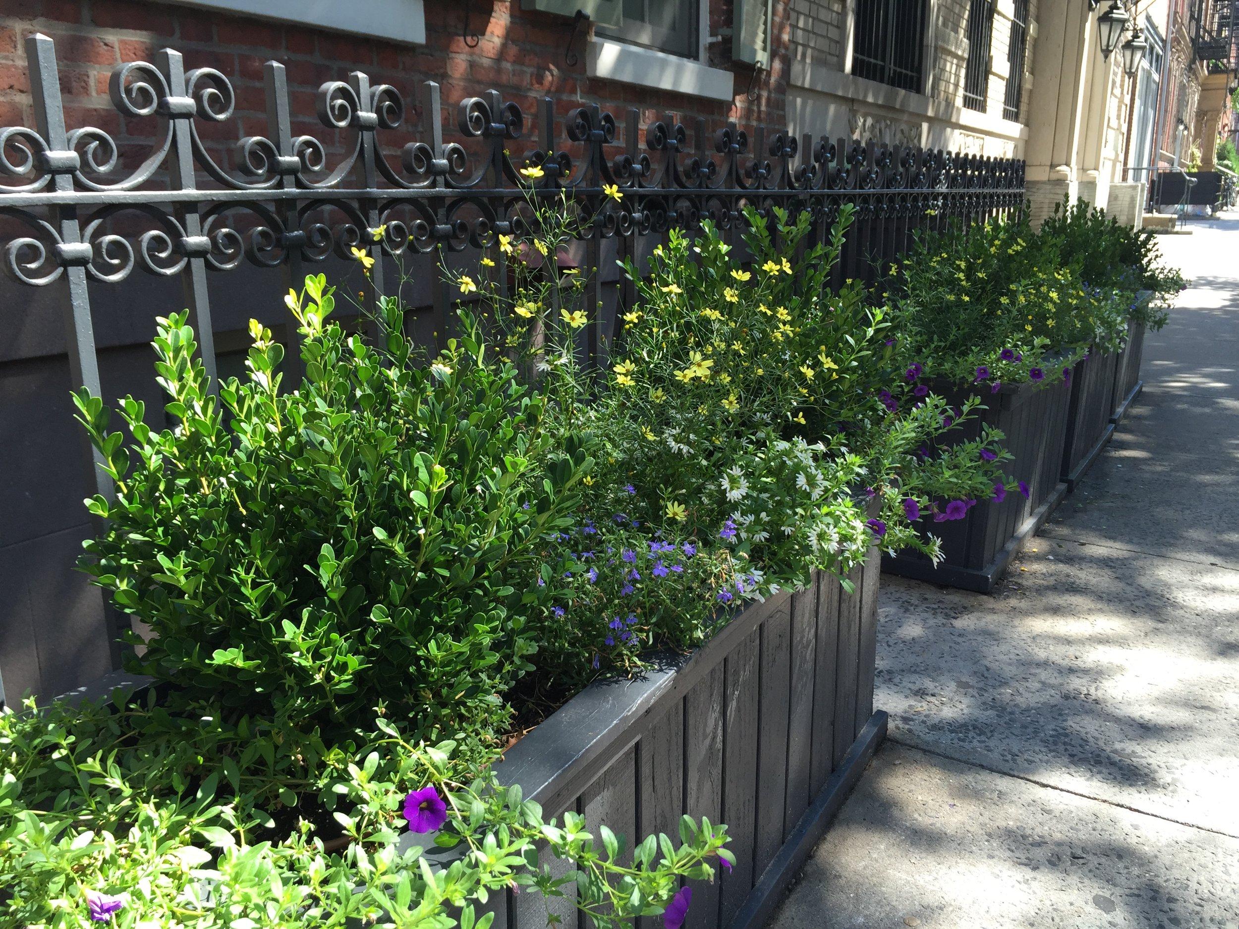 West Village Entrance Row