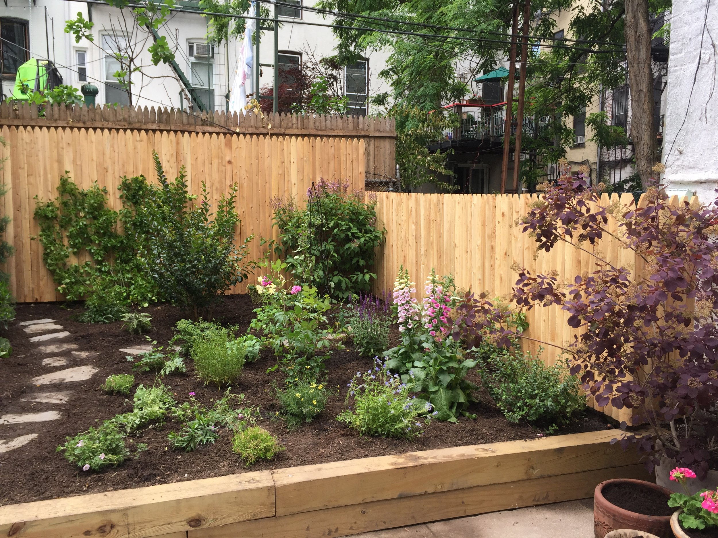 Park Slope Backyard Transformation - New Planting